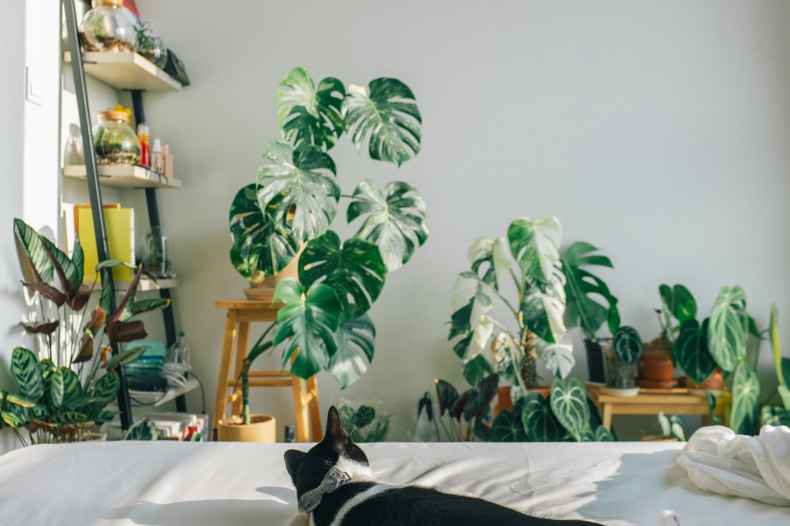 indoor plant to fit the nature-inspired room decor ideas